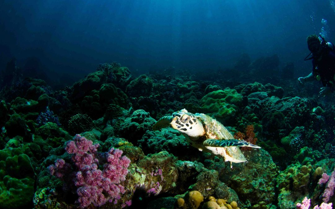 Southern Great Barrier Reef